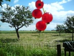 Landung süßer früchte im gelben land